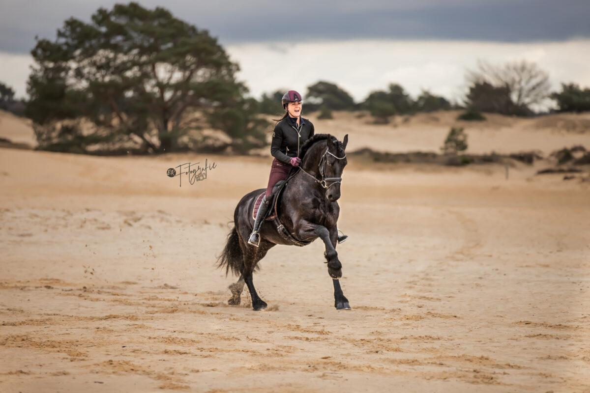 rijfoto fries paard fotografie