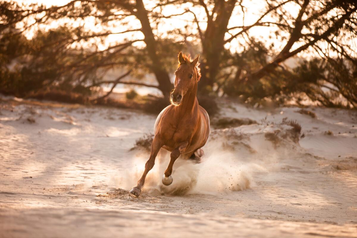 Actiefoto paardenfotograaf