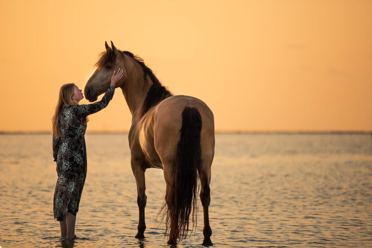 Paardenfotograaf portretfoto